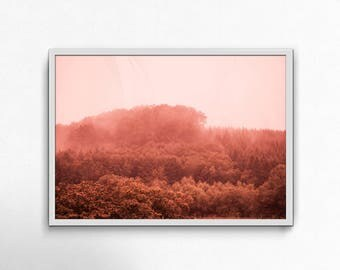 Fog, Forrest, Tree, Nature, Picture, Interior, Design