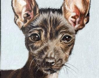 Custom Pet Portrait in Colored Pencil