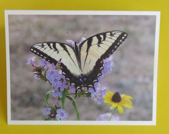 Butterfly Photography Card