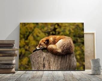 Fox,Wall art,fox wall art,fox art,fox print,fox printable,fox decor,fox poster,,art,printable,print,decor,artistic,bedroom decor,gift