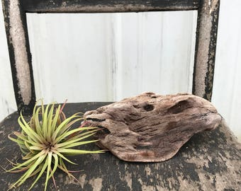 Airplant driftwood display