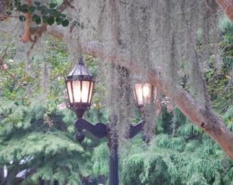 Plantation Light