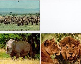 Lot of 3 Vintage African Animal Postcards | Used | Safari, Rhino, Lions, Zebras, Africa | Paper Ephemera | Scrapbooking, Altered Art