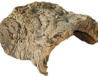 Medium Piece of Cork Bark