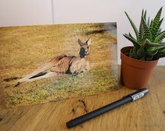 Nature Greeting Cards - Relaxing Kangaroo  - Australian Wildlife