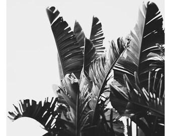 Palm Tree Print - Black and White Photograph - Tropical Art - Travel Photograph - No. 6- Tropical Print -California - Florida - Oversize Art