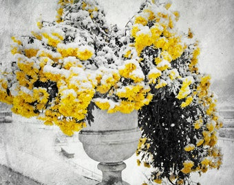 unique decor, Nature photography, Winter photography, yellow decor, Winter wonderland, floral wall decor, Flower decoration