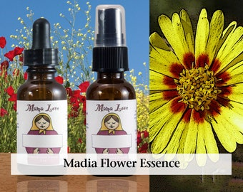 Madia Flower Essence, 1 oz Dropper or Spray for Focus and Concentration