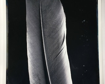 Feather study (edition #1 of 10)