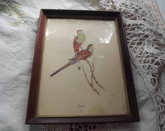 Vintage J. Gould Bird Print framed