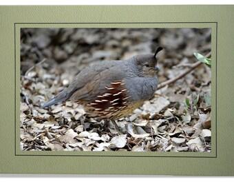 Quail Cards - Gambel's Quail Card - Blank Inside - Quail Note Cards - Gambel's Quail Notecards - Custom Bird Cards - Quail Gifts