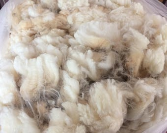Raw Wool Fleece, CVM/Rambouillet Cross, Madeline Mae