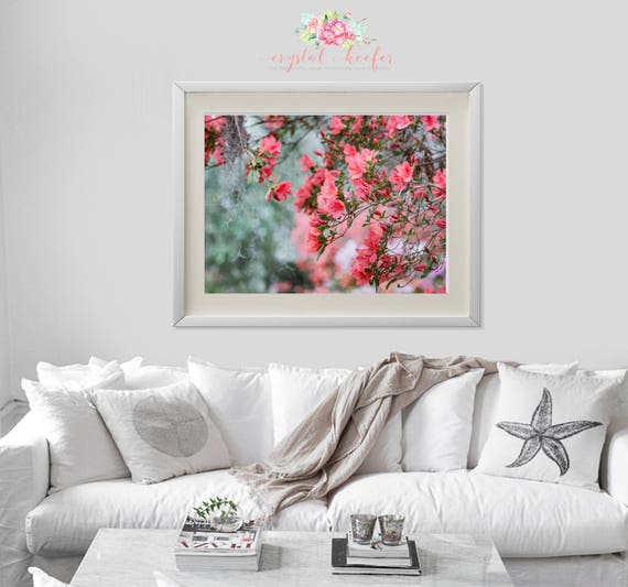 Fine Art Photography - Pink Azaleas Peaking