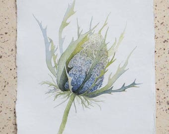 Sea holly original watercolour painting illustration seedheads mrs wilmots ghost gift for gardeners nature painting coastal plant