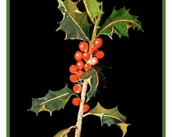 GREAT SALE Mary Delany's Holly and Berries  * from Paper Mosaics* Counted Cross Stitch Chart / Pattern