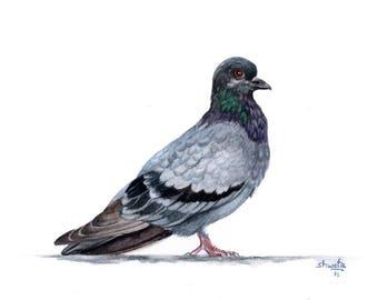 Blue Rock Pigeon Watercolor Painting