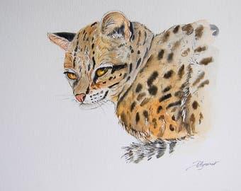 chat margay, animaux, félins, nature, aquarelle et encre