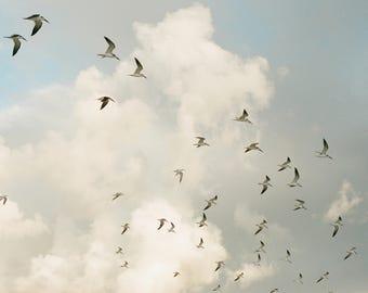 8 x 10 // Film Art Print // film Photograph // Seagulls at sunrise