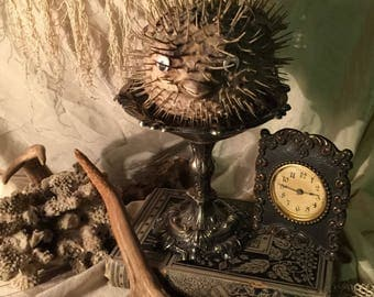 Beach Cottage Decor - Antique Puffer Fish on Old Silver Plate Compote Pedestal
