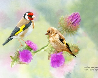bird art print, goldfinch print, outdoor photography, wildlife art print, nature print, wall art prints, wildlife photography, wall décor
