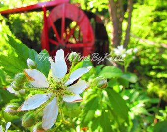 Water wheel - Digital download photo