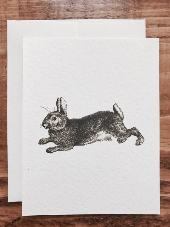 country farm bunny notecards 8 count