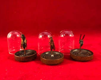 3*Entomology VALUE 3 PACK Unidentified Wasp/Bees Glass Dome Dsplay/Taxidermy