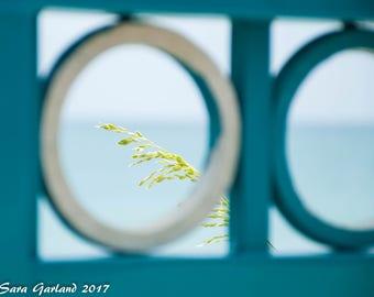 Beach Photography, Color Photography, Atlantic Ocean, Sea Oats, Nautical, Wall Art, Print, Decor, Ocean Photography, Florida, Vero Beach