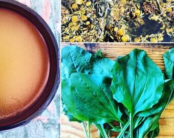 Wild Herb Healing Balm