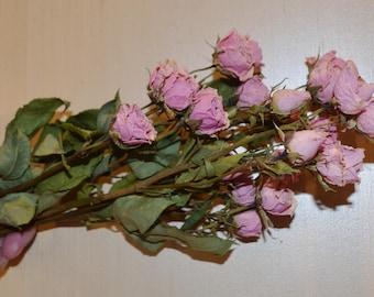 Dried Roses, Pink Roses, Pink dried roses,