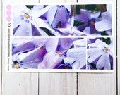 phlox planner stickers | purple  phlox photo stickers | full box planner stickers |  | vinyl matte stickers | spring flowers