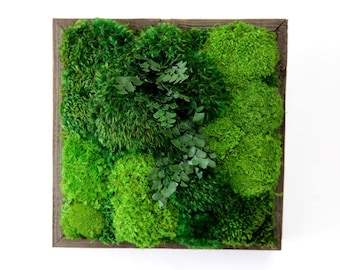 Moss And Ferns In Reclaimed Wood Frame. No Maintenance Green Wall Art. Real  Preserved Part 93