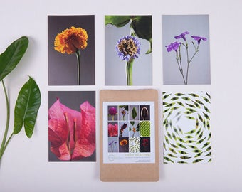 Photosynthesis collection:Light Reaction series,  a set of 12 color botanical postcards
