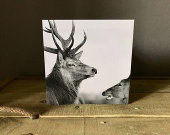 Stag Deer Black & White Greetings Card