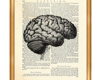 Anatomy Art, Anatomy Gift, Anatomy Print Human Brain Dictionary Art Print Medical illustration Anatomy Poster Gift For