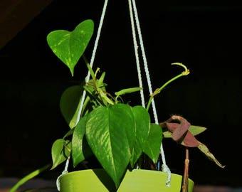 Hanging planter or Bowl Birdfeeder/Water Dish