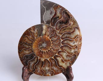 Split Ammonite Fossil Specimen Shell Healing Madagascar,Natural Home Decor+ Free Wenge Stand J508R
