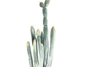 Cereus Jamacaru Cactus - cactus painting - cactus watercolor - cacti painting - southwestern painting - greenery - cacti art - southwest