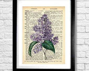 LILAC Vintage Botanical Illustration on Old Sepia Dictionary Page Background Purple Tan Brown Watercolor & Ink Painting 8.5x11