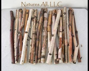 Crafting Sticks/White Birch Sticks/24 Piece Set-12 Inch Lengths/Wood