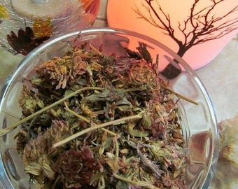 Red Clover Tea - Wild Harvested in the Appalachian Mountains
