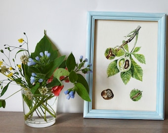 Original watercolor painting| Botanical illustration| Floral painting| Watercolor chestnut painting| Small painting| CHESTNUT
