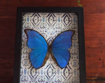 Butterfly Display // Real Blue Morpho // Insect Frame // Insect Taxidermy // Home Decor