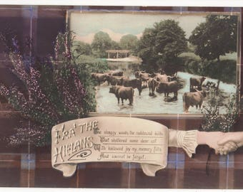 Highland CATTLE,Vintage Real Photo Postcard, Fra' The HIELANS, Tartan,Heather,Hands Clasping, EAS, c1910