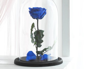 Beauty and the beast rose, Enchanted Rose, Rose in glass dome, Forever rose, Rose in Glass, preserved rose, Forever navy rose, Belle rose