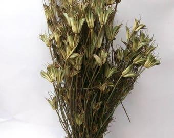 Dried Nigella Orientalise/Love in a Mist/Grass Bundle/Dried Leaf/Dried floral arrangement/natural dried plant/grass bouquet