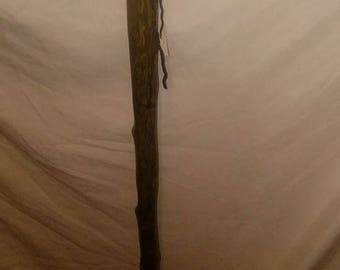Walking Stick, Cedar