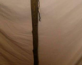 Walking Stick, Cedar