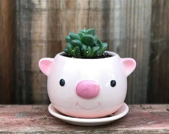 Cute ceramic PIG succulent planter (PLANT INCLUDED) - Adorable animal planter