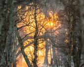 Holme Fen Sunrise